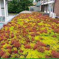 Flordepot vegetatiedak of groendak voor plat dak of hellend dak sedumdak