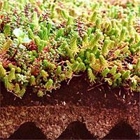 Voor het realiseren van een vegetatiedak gebruiken wij het Flordepot Sedum groendaksysteem.